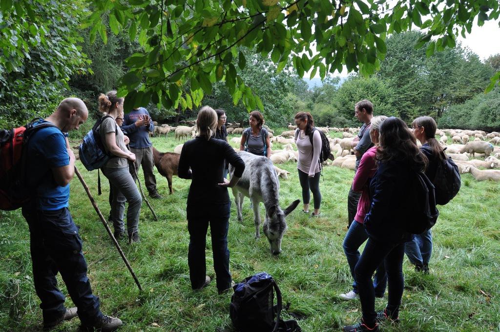 Teamevent Schafe hüten